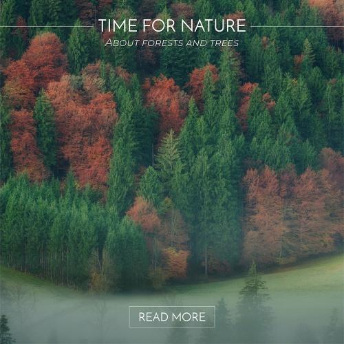 À propos de forêts et d'arbres