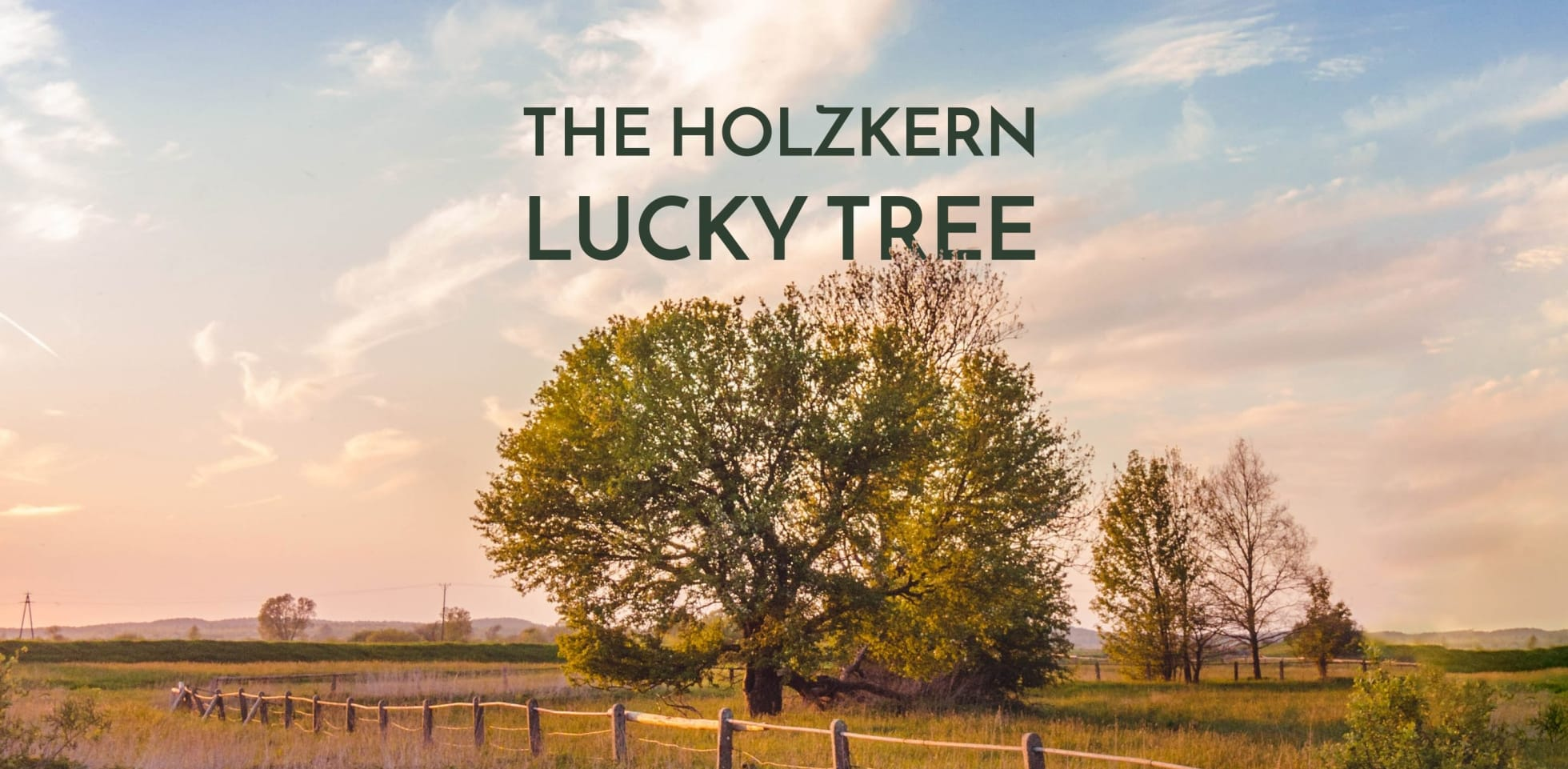 The Holzkern Lucky Tree is flowering again