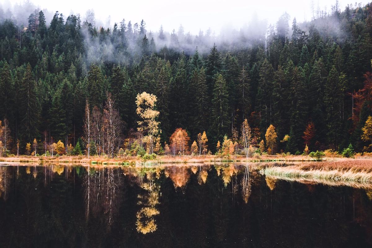 Incantevole Foresta Nera