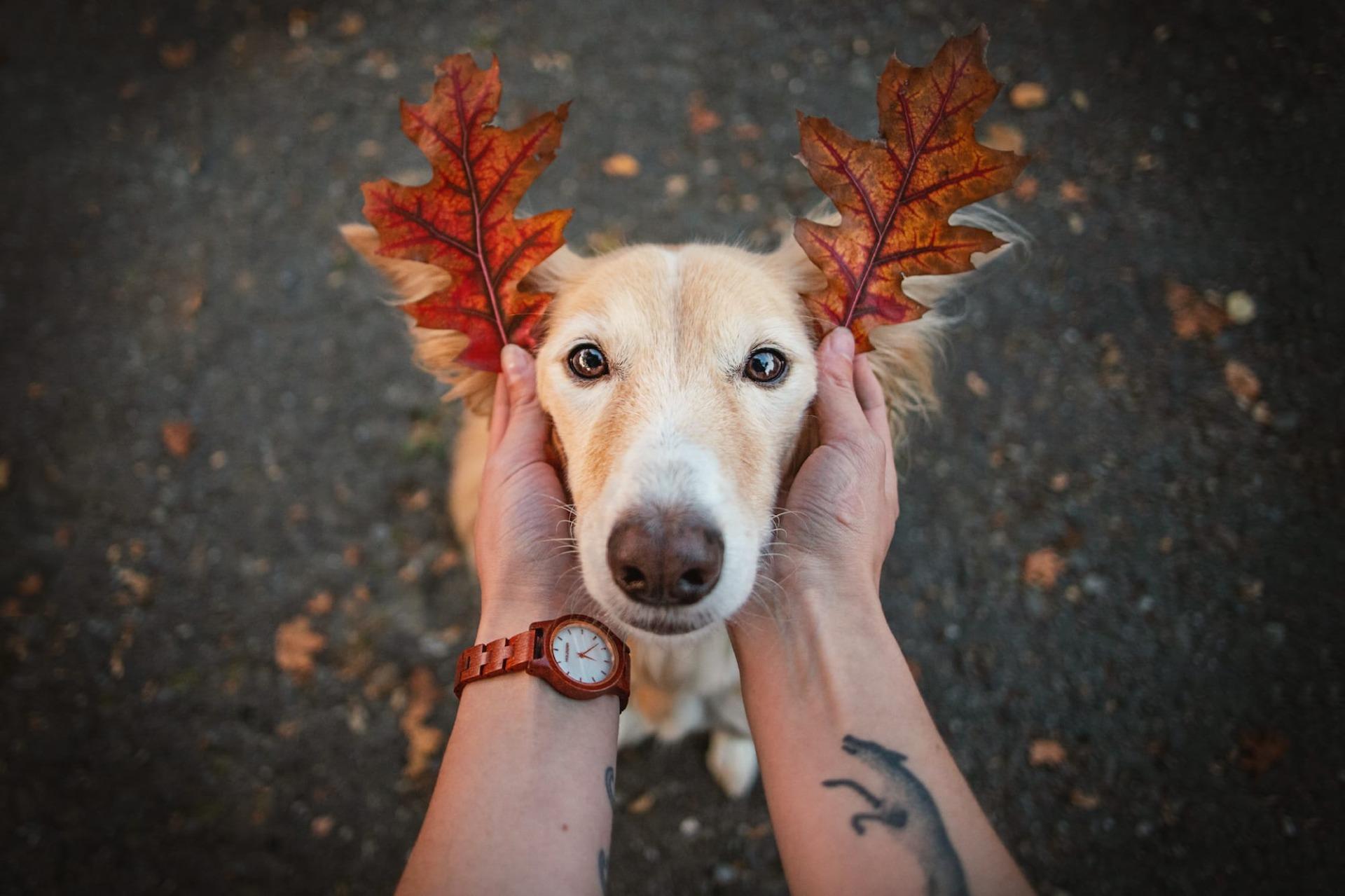 Hund Blätter