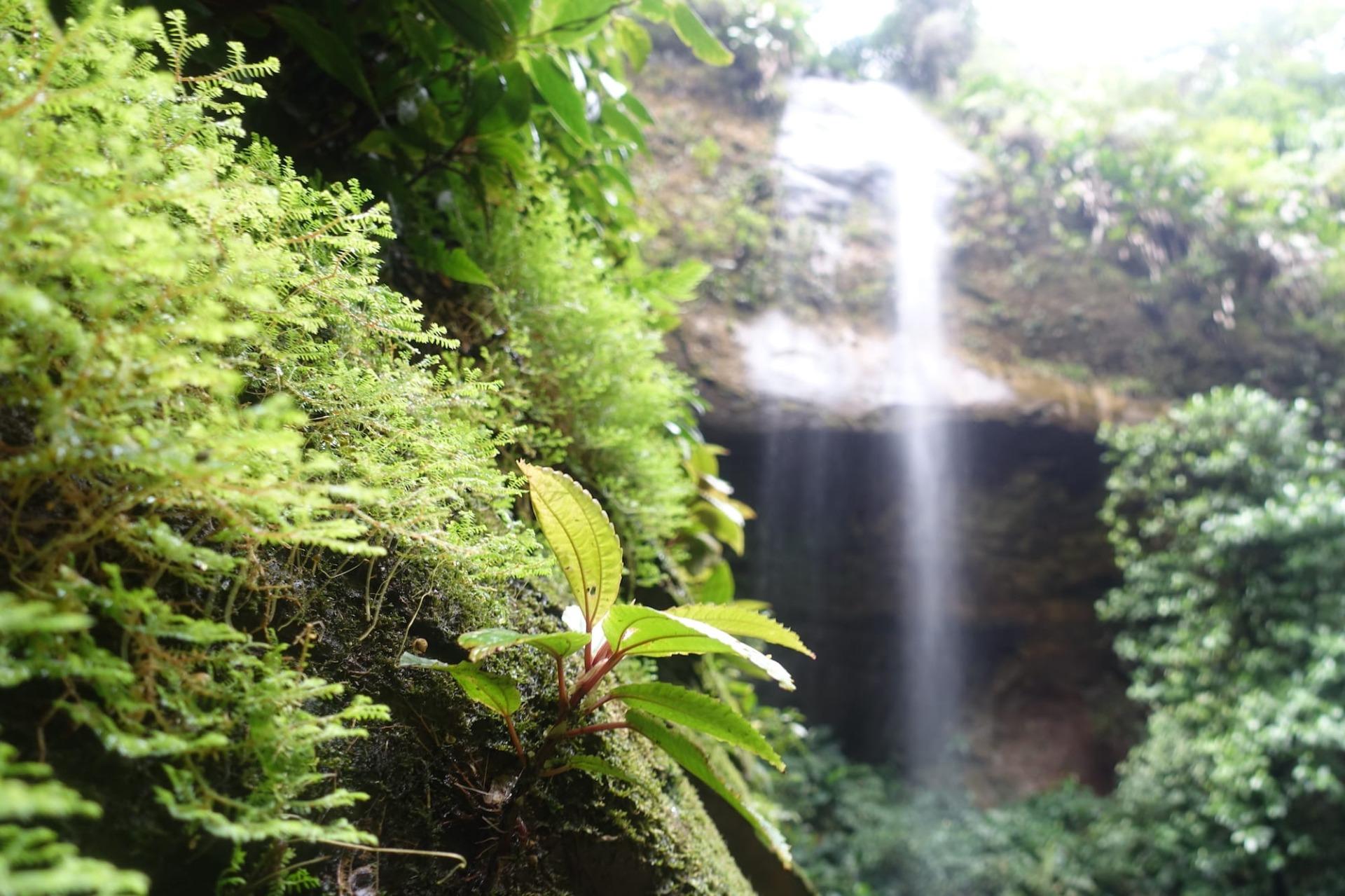 Luogo selvaggio della Colombia