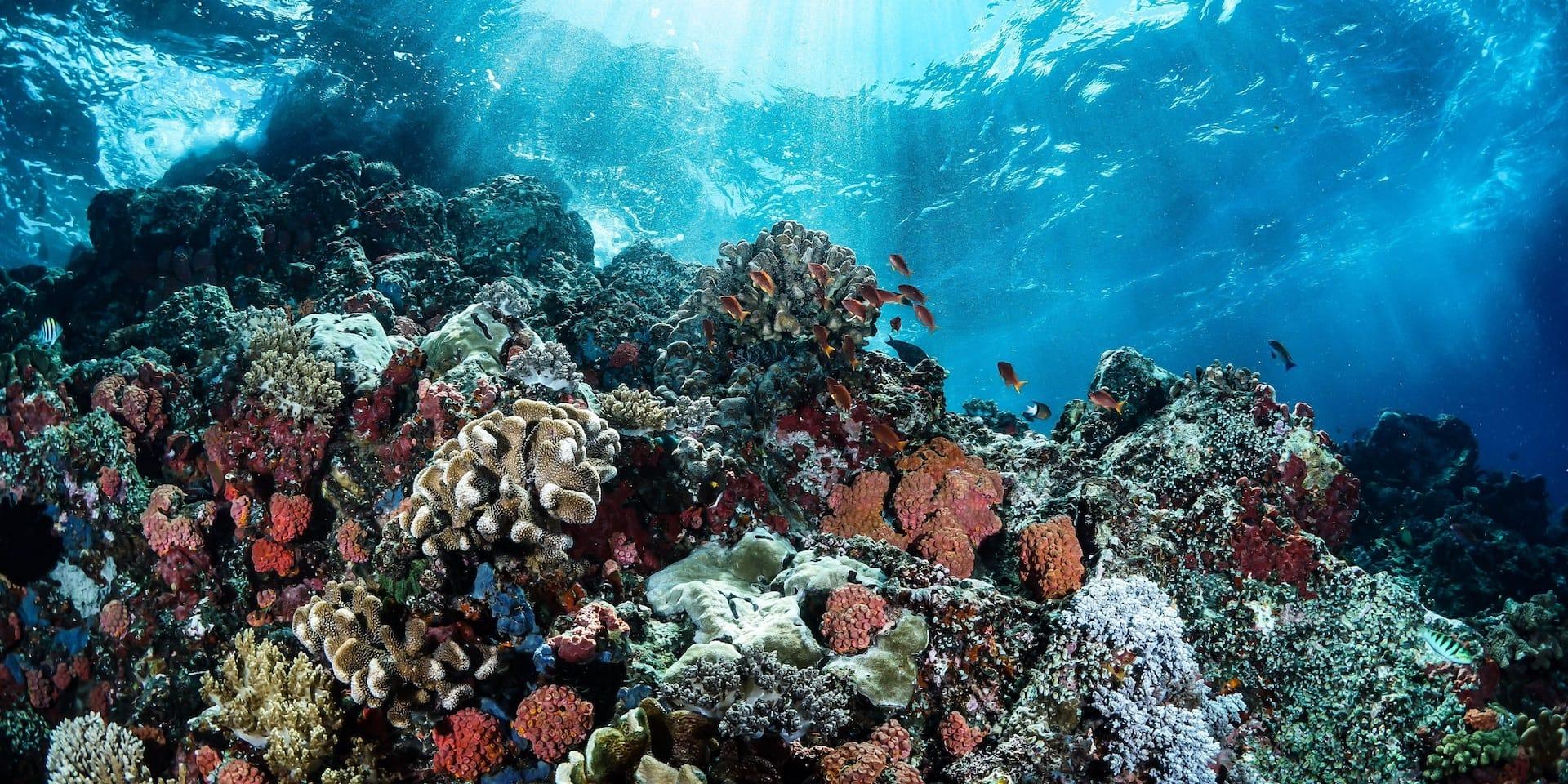 Ocean Month bei Holzkern
