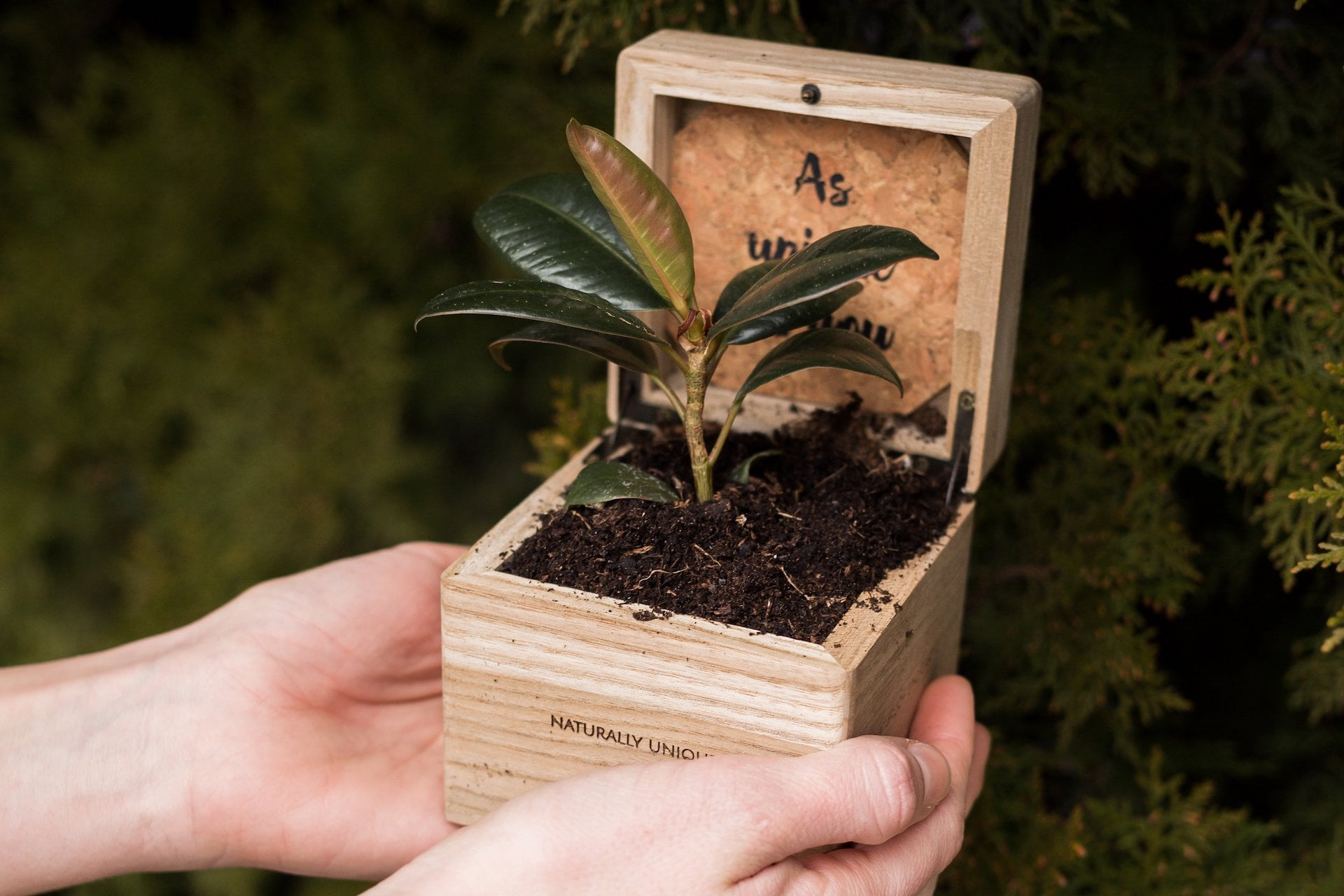 Forest Month bei Holzkern